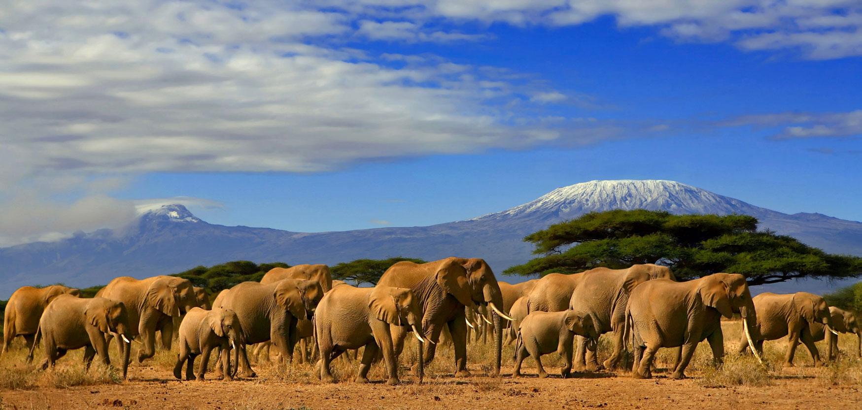 Hiking to the Summit of Mount Kilimanjaro